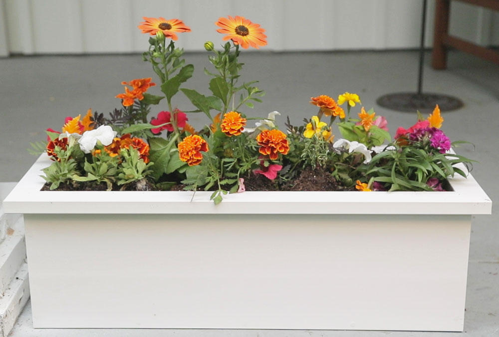 completed white flower box with multicolored flowers